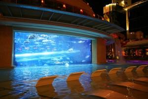 Golden-Nugget-pool-in-Las-Vegas-Nevada