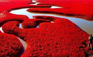 red-beach-at-panjin-china